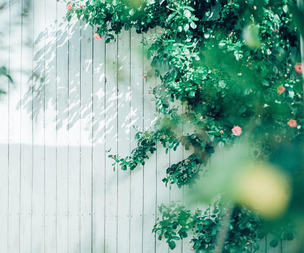 バラのあるガーデンのイメージ